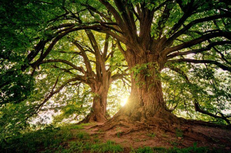 Trees-768x511.jpg